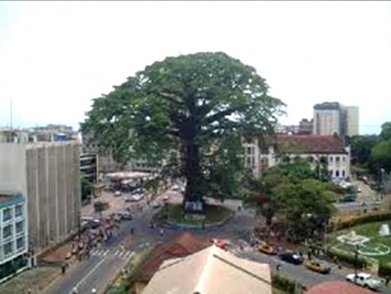 June2013_TripToSL_Freetown--1787-Cotton-tree